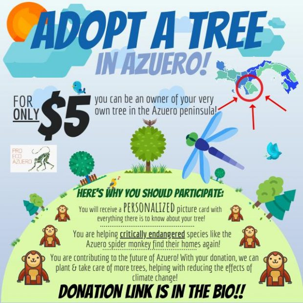 Adopt a tree in Azuero!